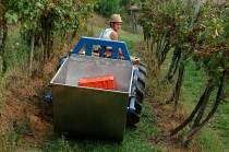 Trasporto dell'uva